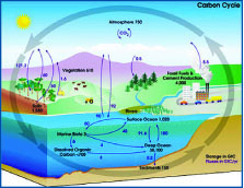 Gobal Carbon Cycle