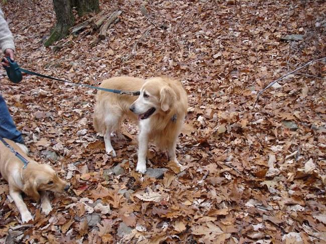Fall Hike 5
