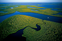 Researchers Jose Fuentes and Michael Mann to investigate Everglades ecosystem, climate change